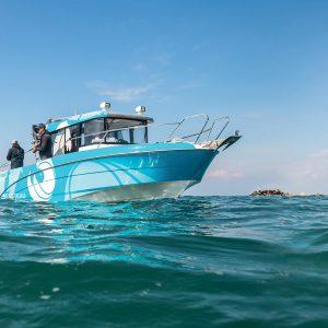 barche Beneteau motore fuoribordo: Barracuda 8